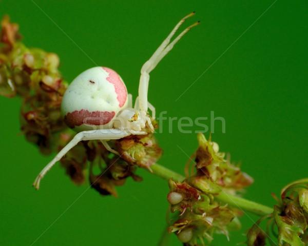 краба Spider завода ждет добыча природы Сток-фото © brm1949