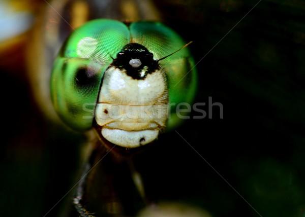 Dragonfly Head Stock photo © brm1949