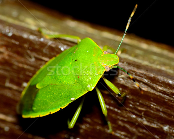 Bug top schild insect macro Stockfoto © brm1949