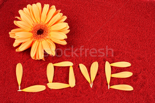 Daisy and the word love Stock photo © broker