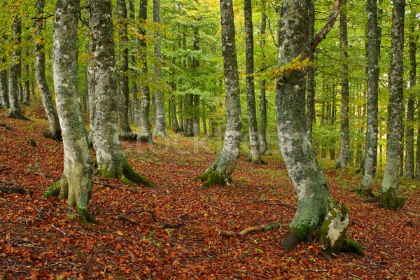 Stock fotó: Színek · ősz · zuhan · levelek · égbolt · fa