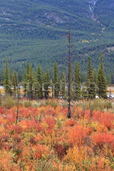 Parque árvores montanhas cair turismo Foto stock © broker