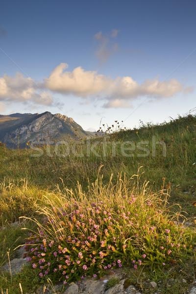 Solitary mountain Stock photo © broker