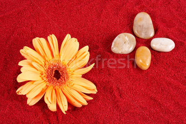 Daisy and four stones on the sand Stock photo © broker