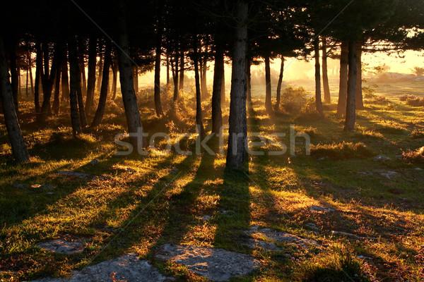 Risveglio giorno foresta luce alberi spazio Foto d'archivio © broker