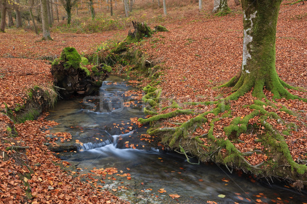 Cores queda folhas floresta paisagem Foto stock © broker