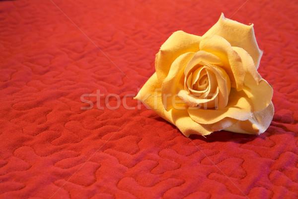 Flower on red background Stock photo © broker