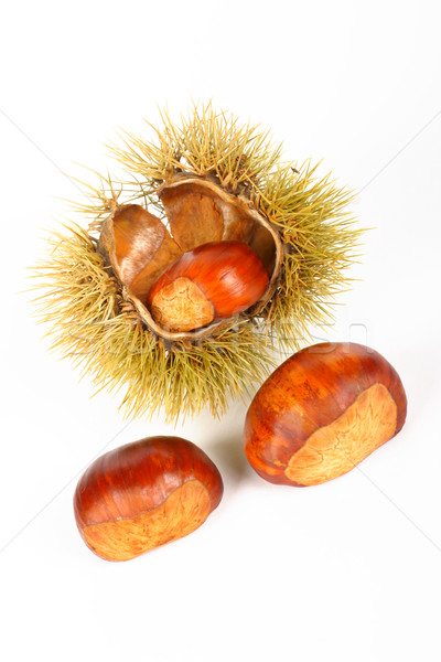 Two chestnuts and open spiny curl Stock photo © broker