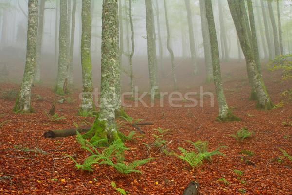 Színek ködös ősz zuhan levelek égbolt Stock fotó © broker