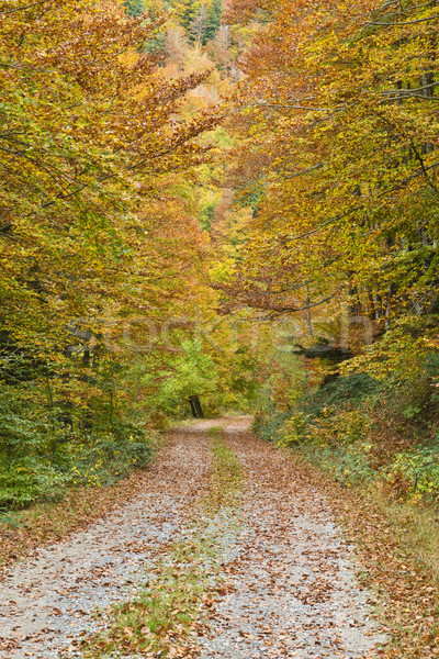 Lonely road to the forest Stock photo © broker