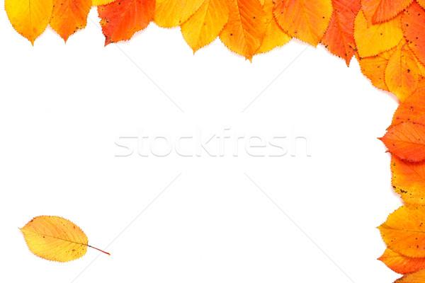 Outono quadro colorido canto folhas macio Foto stock © broker