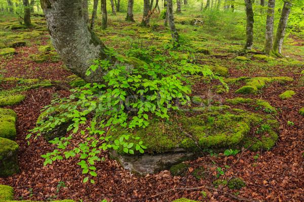 Colores temporada de otoño caer hojas forestales Santiago Foto stock © broker