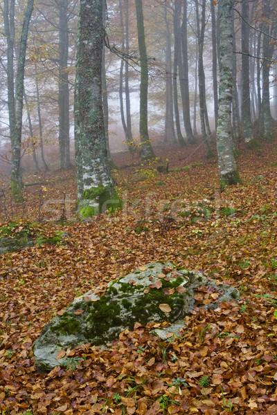 Stock fotó: Színek · ködös · ősz · zuhan · levelek · őszi · idény