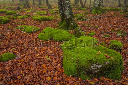 Stock fotó: őszi · idény · erdő · zuhan · levelek · színek · Santiago