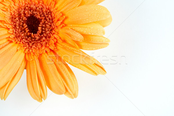 Partial view of a daisy Stock photo © broker