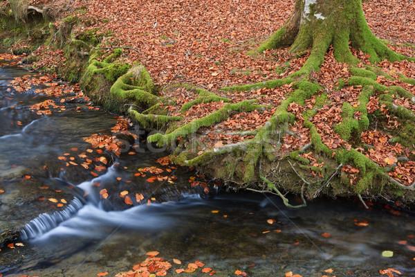 Colors in autumn season Stock photo © broker