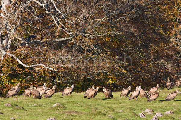 Pradera grupo mar montana aves pluma Foto stock © broker