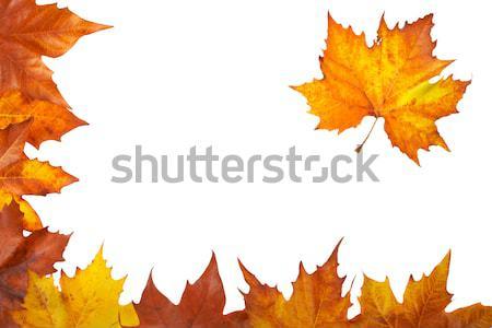 秋 コーナー カラフル 葉 孤立した 白 ストックフォト © broker