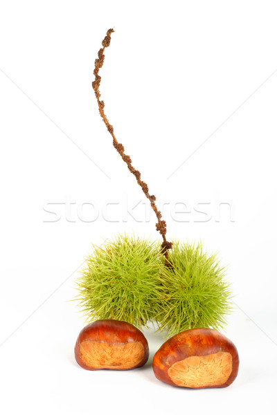 Dos verde forestales naturaleza frutas otono Foto stock © broker