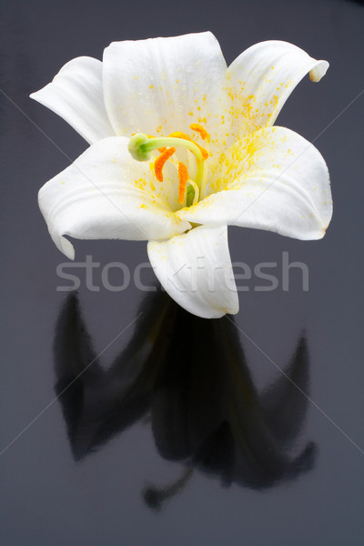 Macro shot white flower with reflecting Stock photo © broker