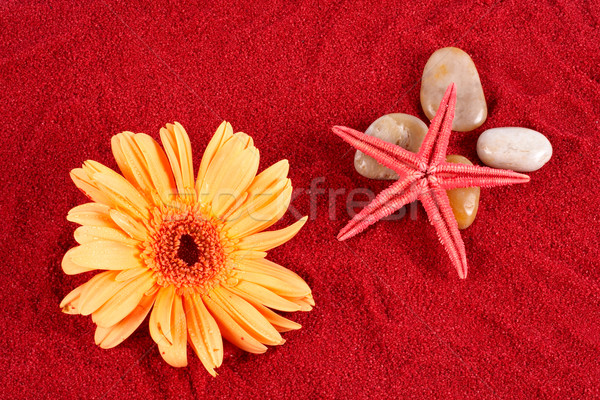 Daisy and starfish over four stones on the sand Stock photo © broker