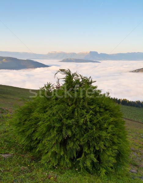 Sunrise over the fog Stock photo © broker