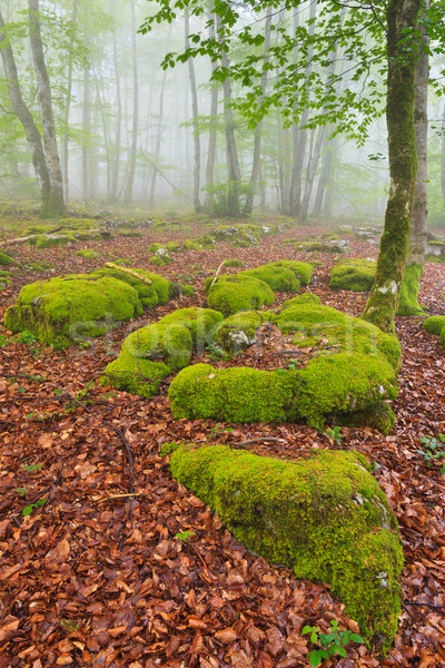Cores queda folhas floresta Santiago Foto stock © broker