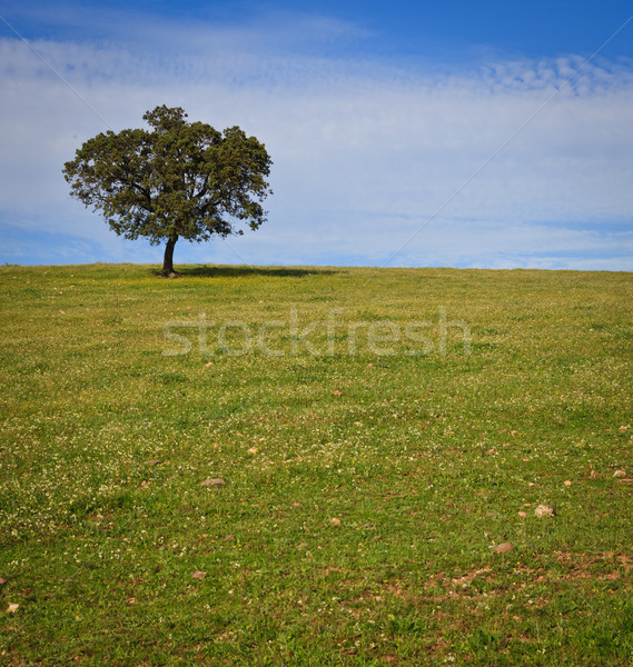 Solitary tree on blue sky Stock photo © broker