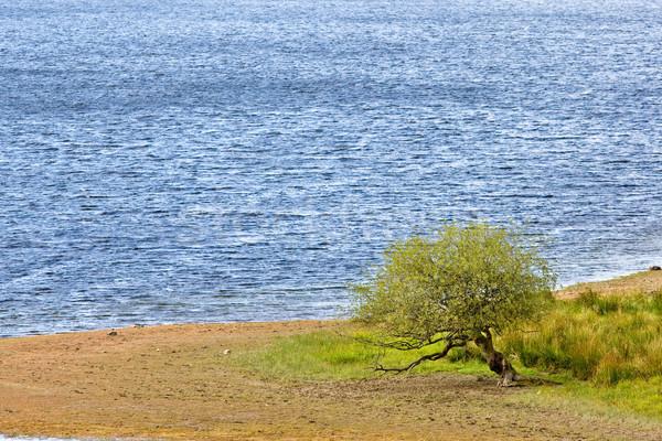 Solitary tree Stock photo © broker
