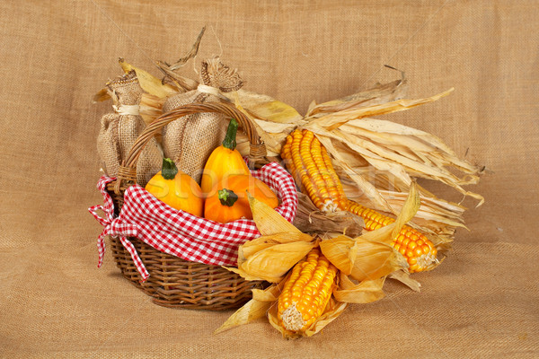 Yellow pumpkins and cobs Stock photo © broker