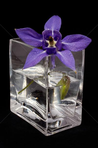 синий цветок ваза черный воды весны лист Сток-фото © broker