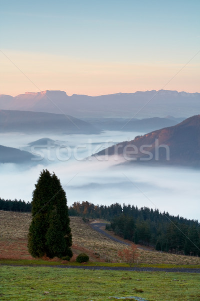 Solitary tree on the fog sea Stock photo © broker