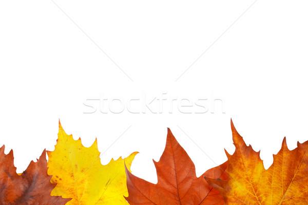 Outono fronteira colorido folhas isolado branco Foto stock © broker