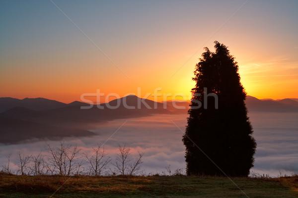 The tree Above the fog Stock photo © broker