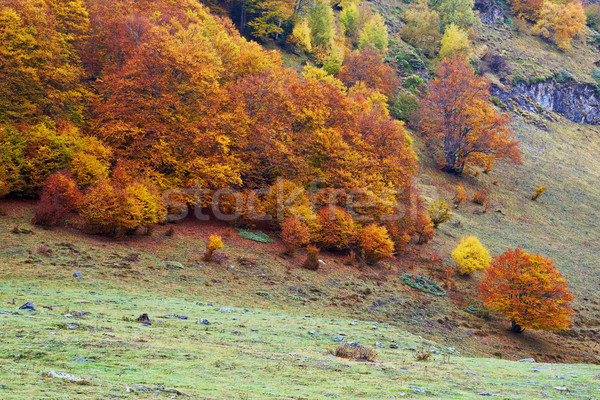 Autumn colors in the forest Stock photo © broker