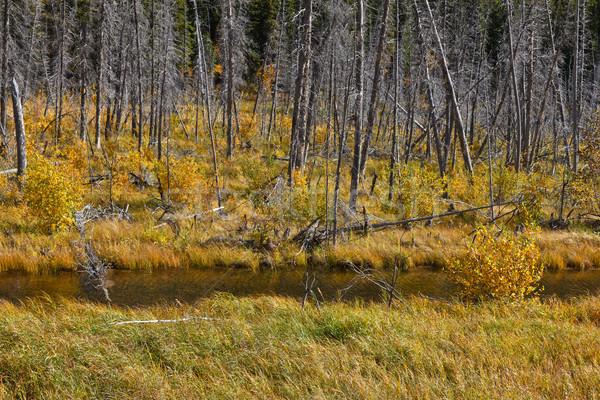 Marshy ponds Stock photo © broker