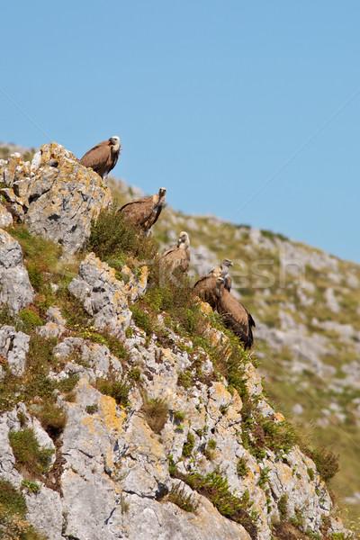 Rocas grupo montana naturaleza mar aves Foto stock © broker
