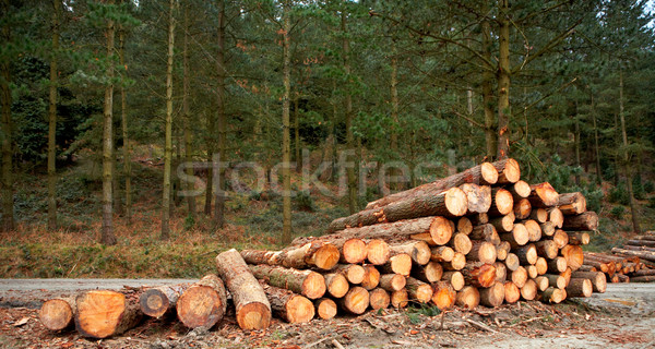 Logs stacked Stock photo © broker