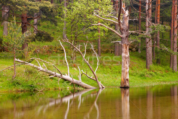 Stock photo: Old trees reflected in the river