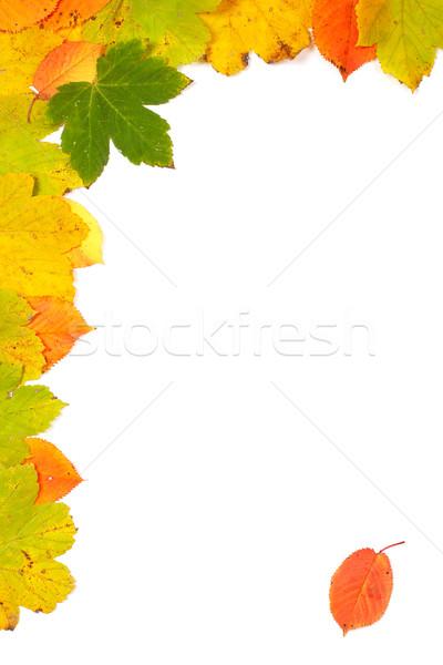 красочный углу осень листьев мягкой тень Сток-фото © broker