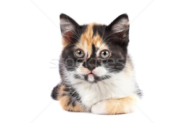 Kitten sits Stock photo © broker