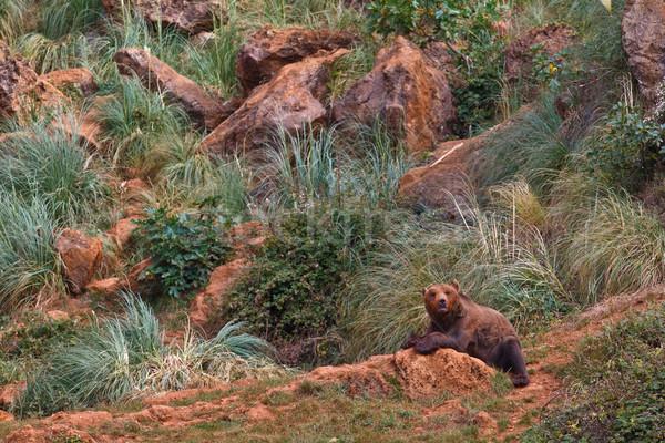 Bruine beer een rock mond park Stockfoto © broker