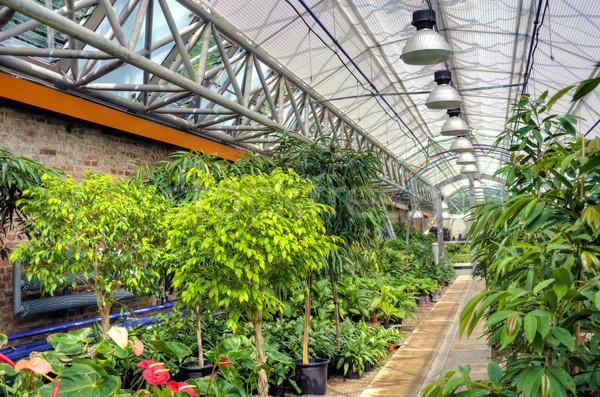 Flowers in modern greenhouse Stock photo © brozova