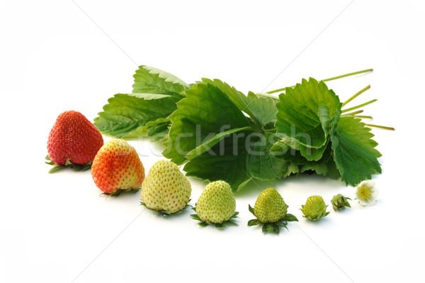 Сток-фото: клубника · роста · изолированный · белый · цветок · продовольствие
