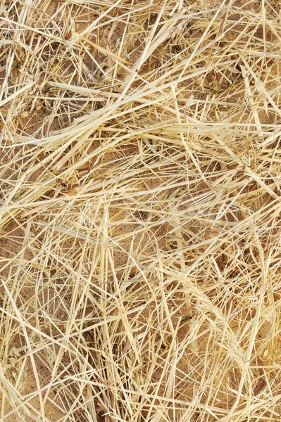 Detail of dry grass hay background Stock photo © brozova