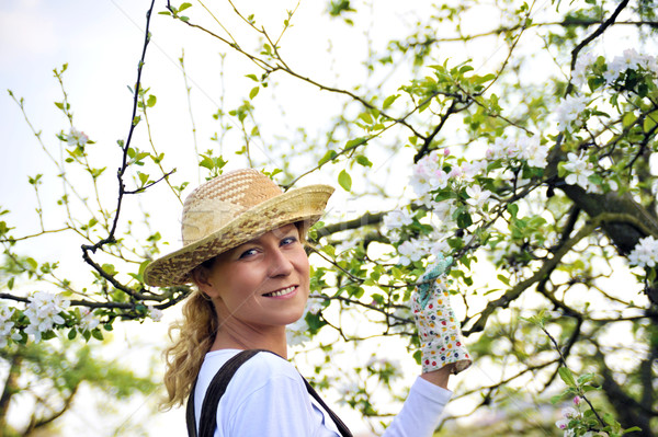 Young woman gardening - in apple tree orchard Stock photo © brozova