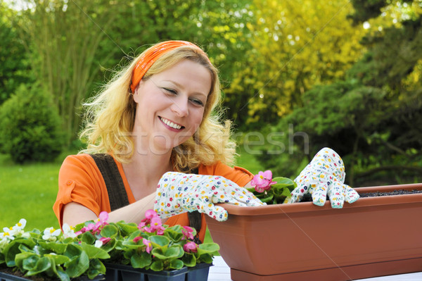 Young woman planting flowers Stock photo © brozova