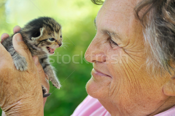 Senior woman holding little kitten Stock photo © brozova