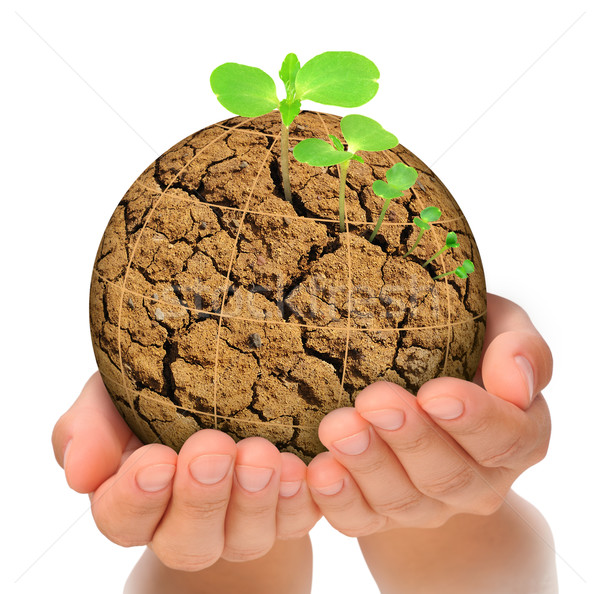 Plant growing out of parched planet in hands, evolution concept Stock photo © brozova