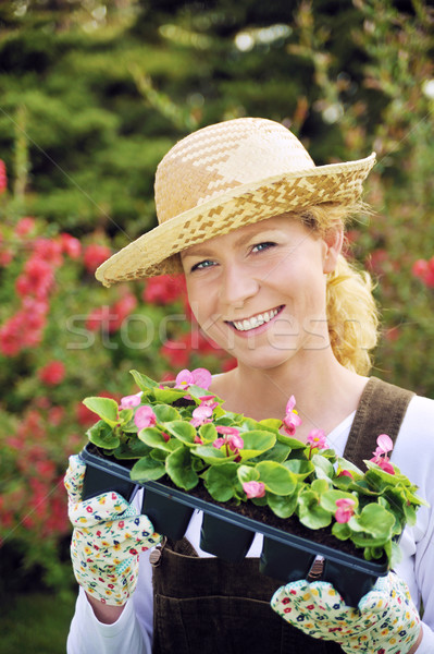 Young woman with container-grown plants Stock photo © brozova